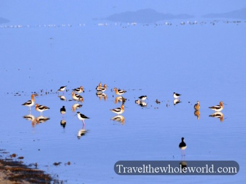 Utah Salt Lake Antelope Island Birds