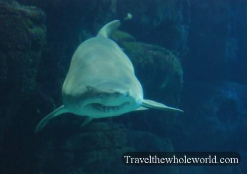 Virginia Beach Aquarium Shark