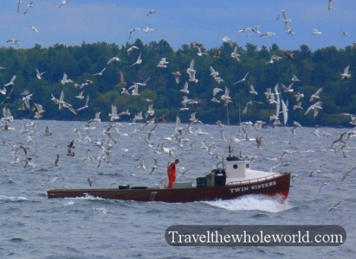 Wisconsin Apostle Islands Gulls