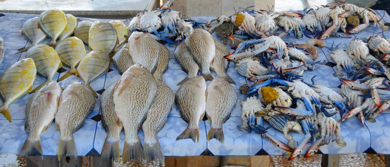 Yemen Aden Seafood Market