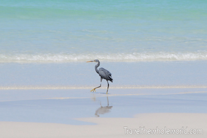 Yemen-Socotra-Bird-Beach