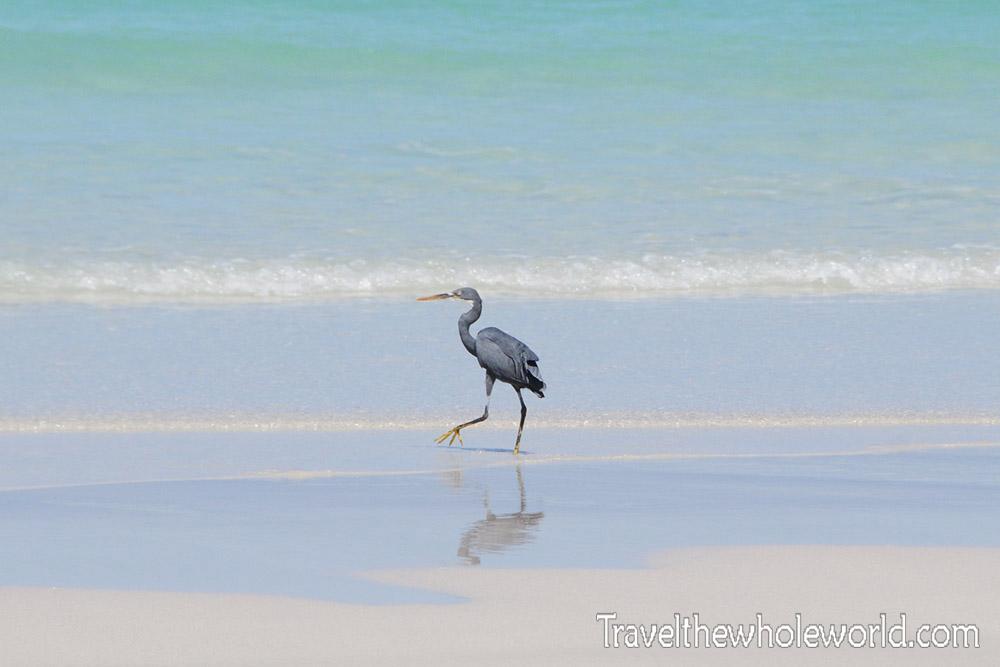 Yemen Socotra Heron Beach