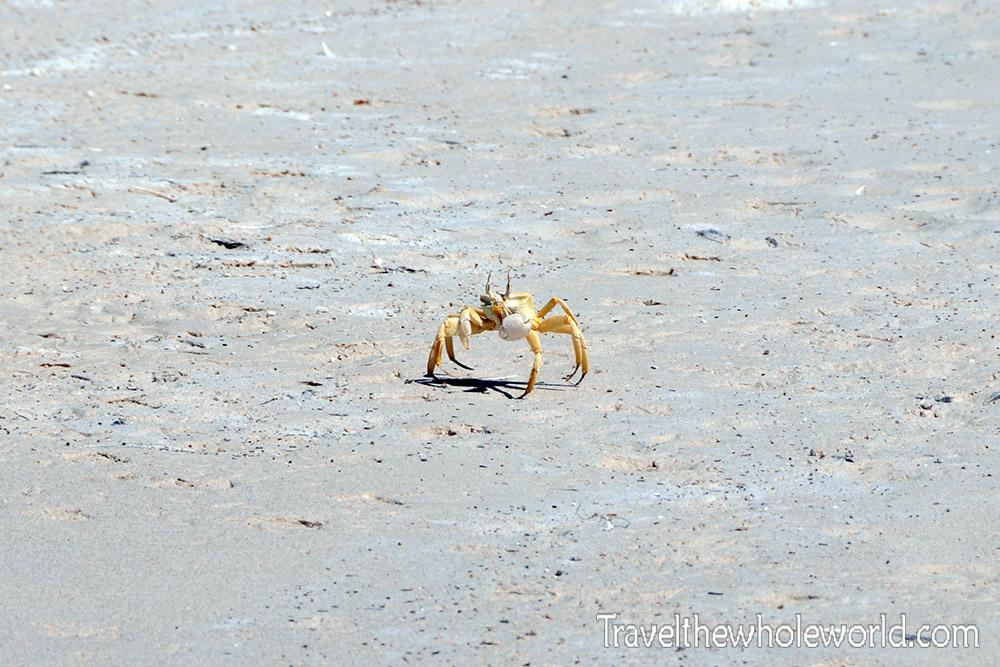 Yemen Socotra Crab