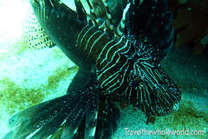 Yemen-Socotra-Diving-Fish-Lion2
