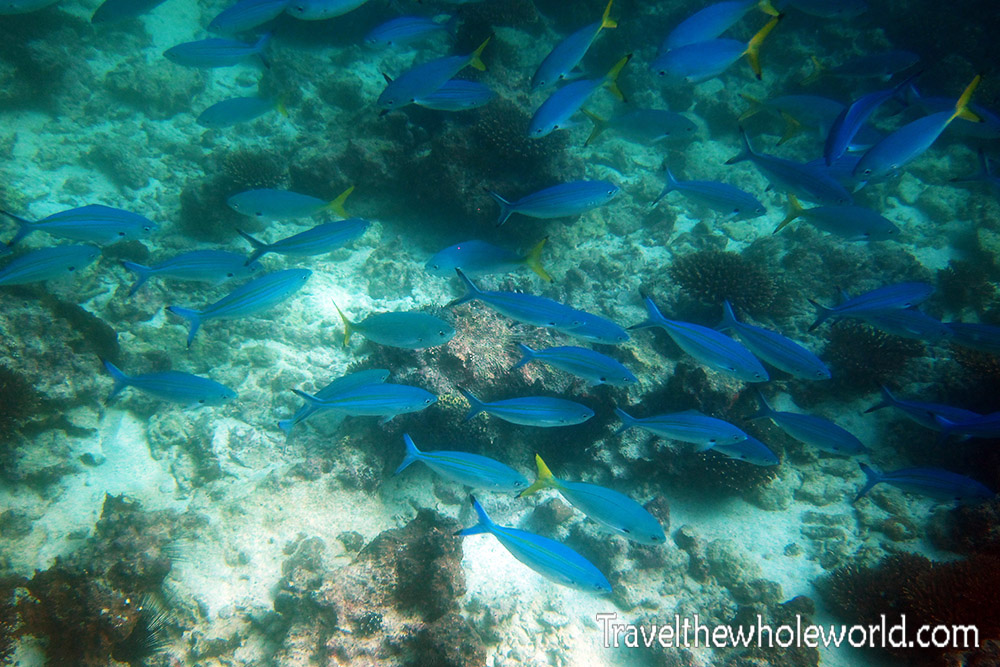 Yemen Socotra Diving Fish School
