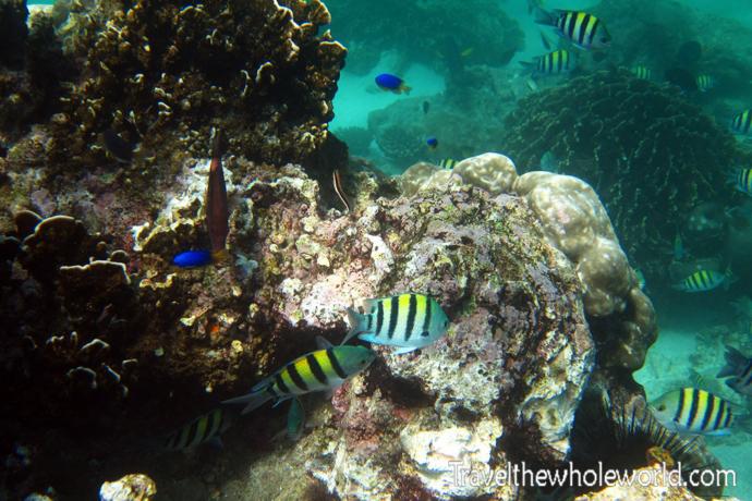 Yemen-Socotra-Diving-Fish-Yellow