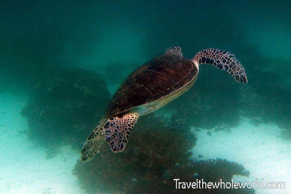Yemen Socotra Diving Turtle