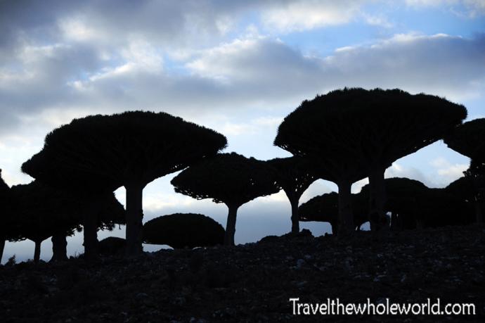 Yemen Socotra Dragon Trees Night