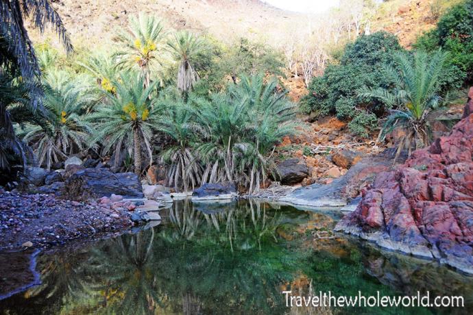 Yemen Socotra Oasis
