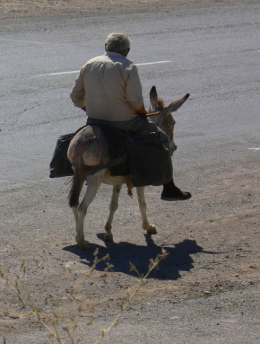 Armenia Donkey