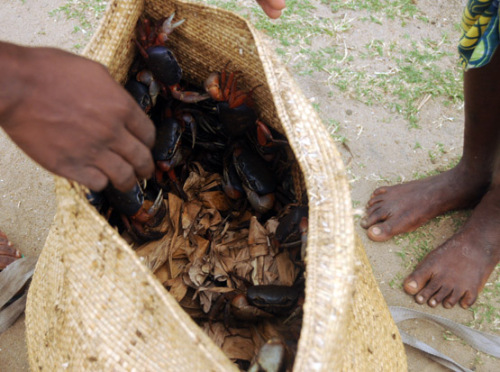 Benin Coastal Village Crabs