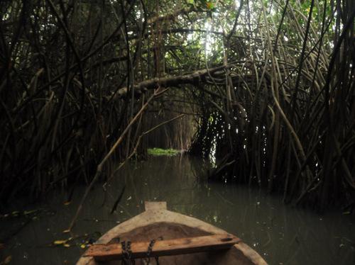 African Mangrove Ride
