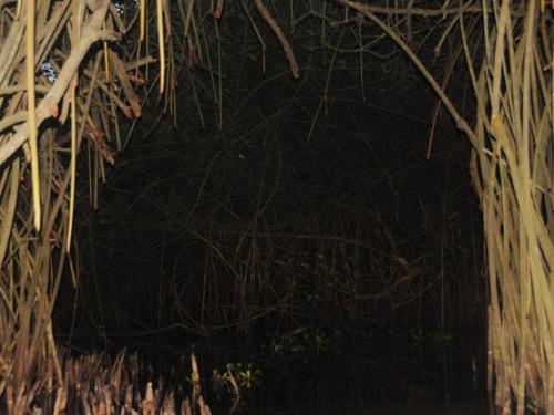 African Mangroves