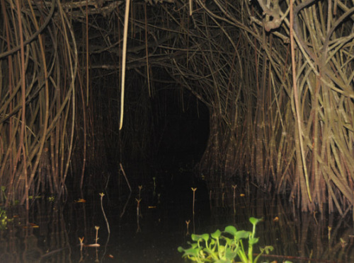 Benin Mangrove Swamp