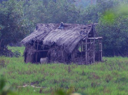 Benin Marsh House