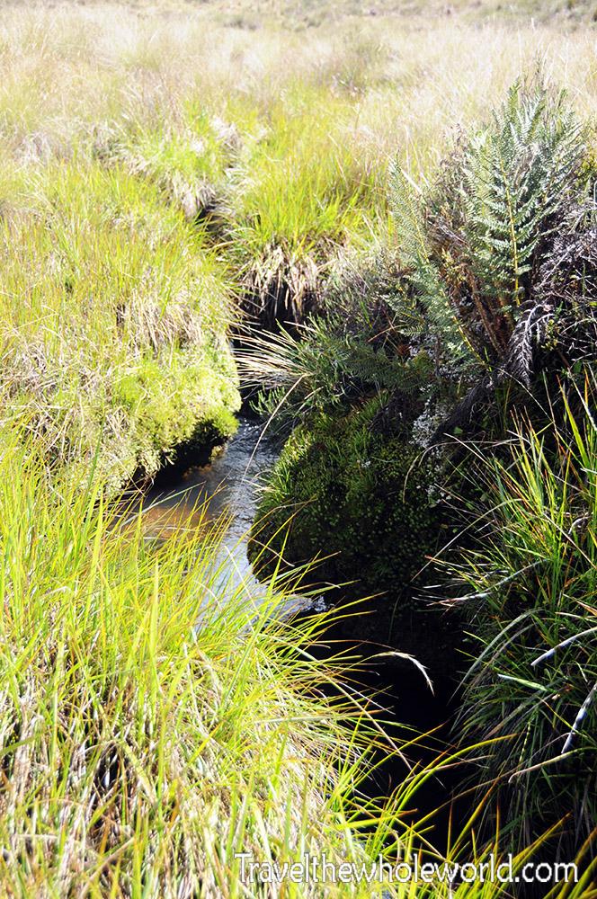 Carstensz Pyramid Meadows Stream