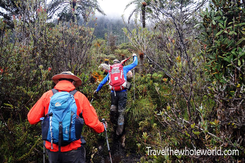 Carstensz Pyramid Meadows Trail