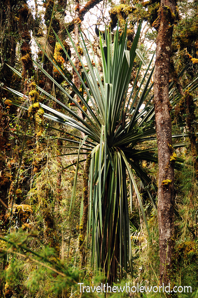 Carstensz-Pyramid-Rainforest-Palm