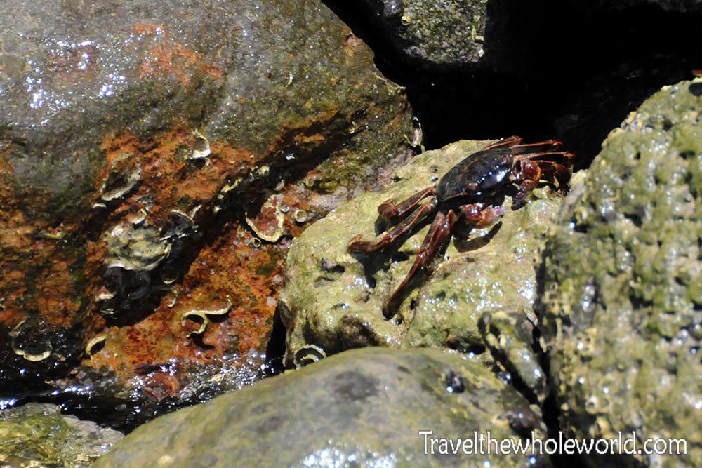 Djibouti City Crab