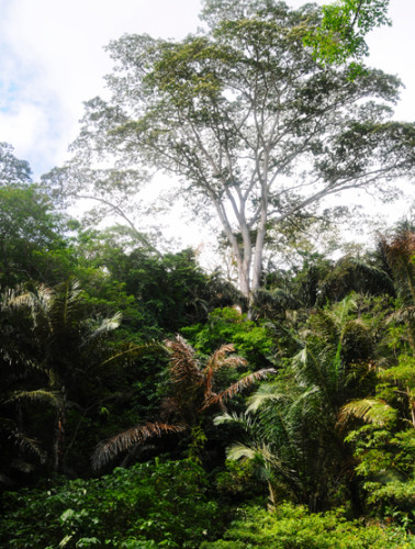 East Timor Jungle