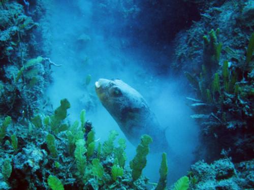 East Timor Scuba Diving Fish Dust
