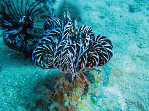 East Timor Diving Plant