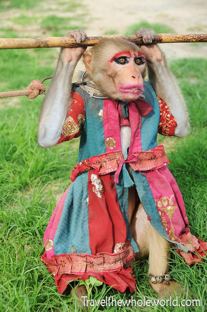 India Monkey Fashion