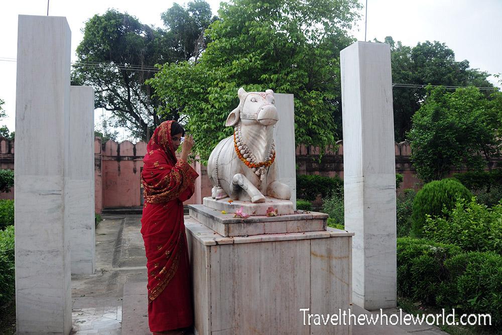 India Varanasi Temple Cow