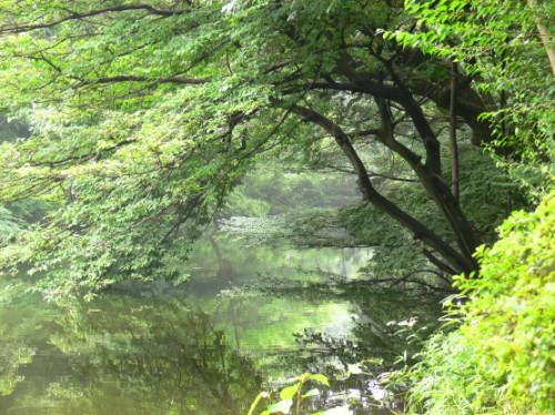 Japan Meija Jinku Pond