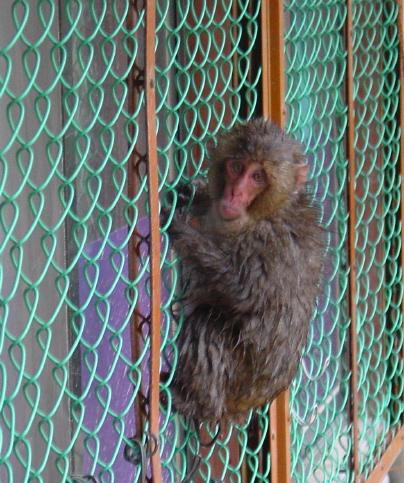 Japan Monkey Fence