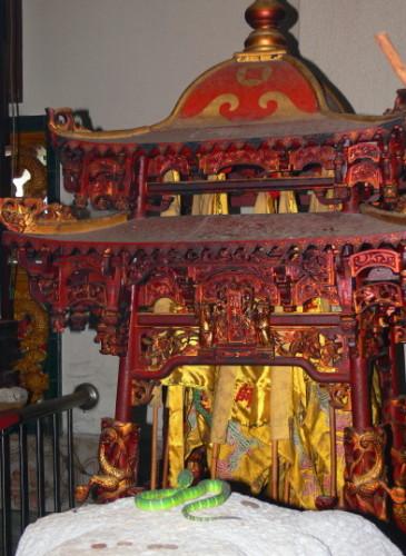 Malaysia Snake Temple Worship