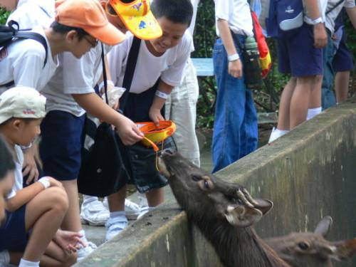 Malaysia Zoo Feeding