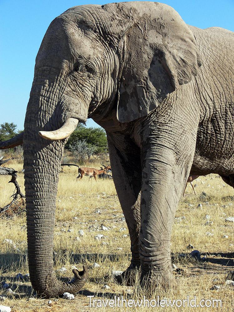 Etosha Namibia Elephant