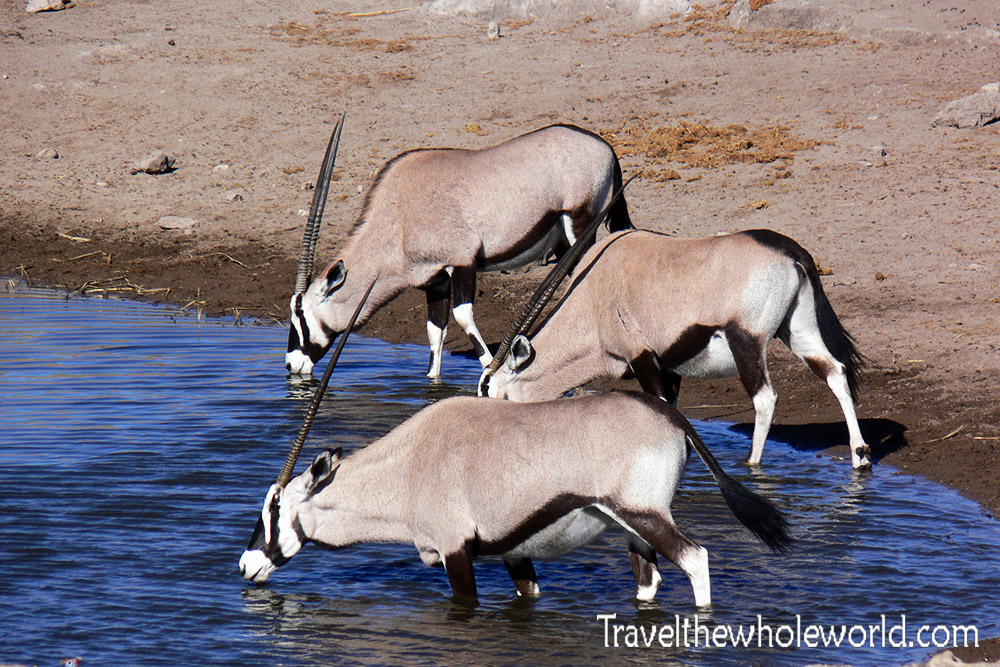 Namibia Etosha Gemsbok Drinking