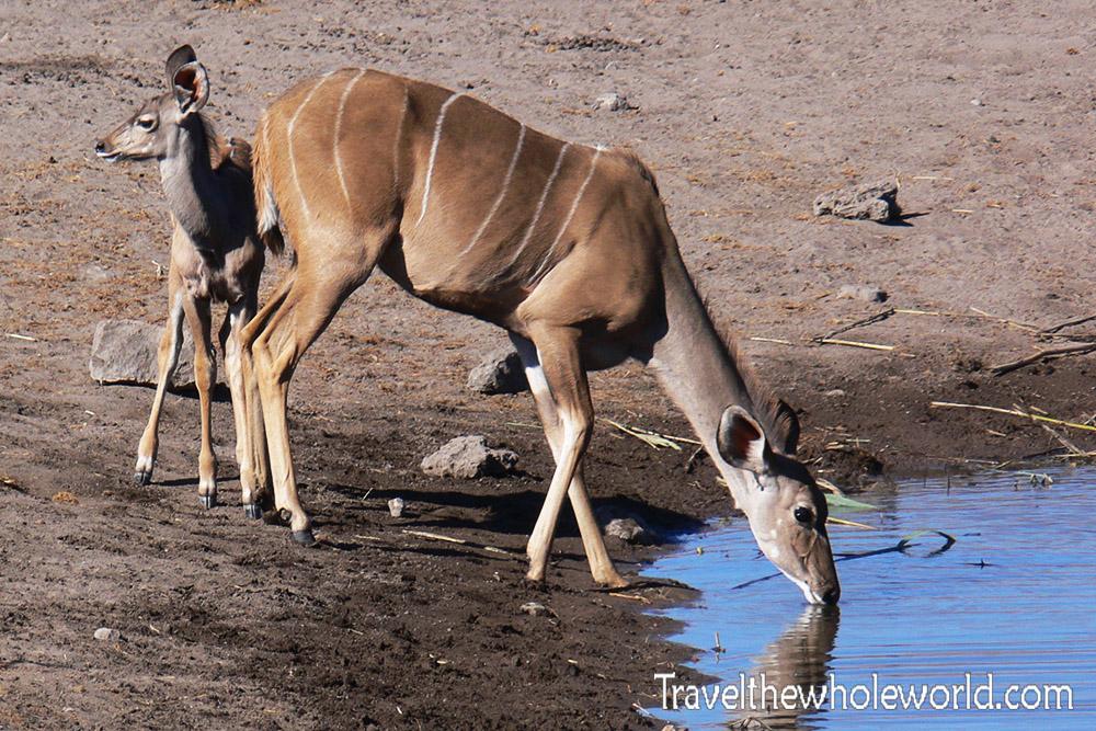 Namibia Etosha Kudu
