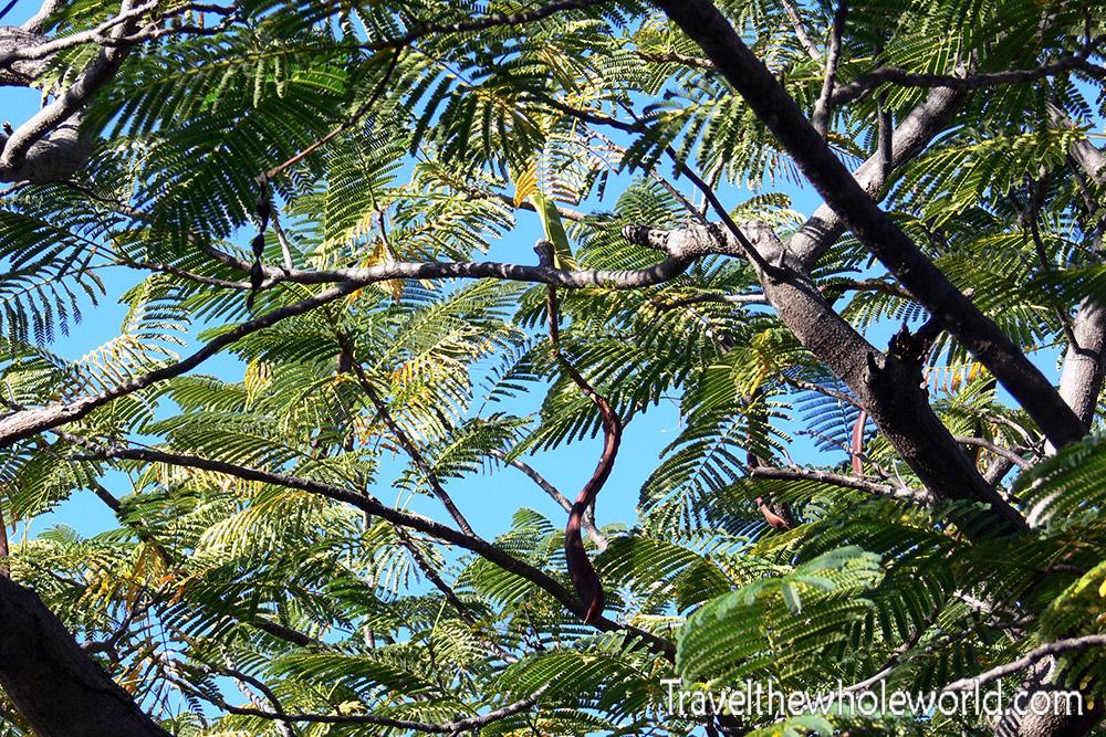 Namibia Etosha Leaves