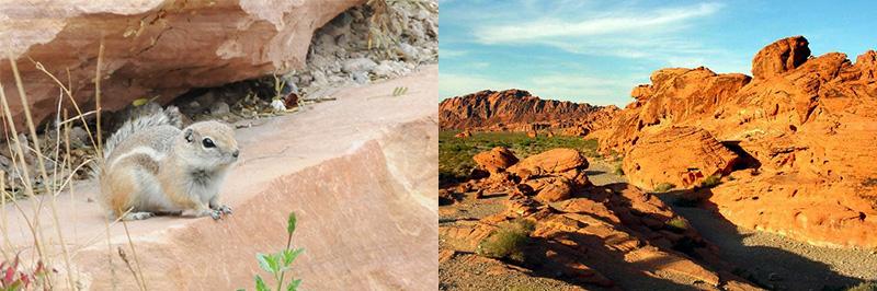 Nevada-Deserts