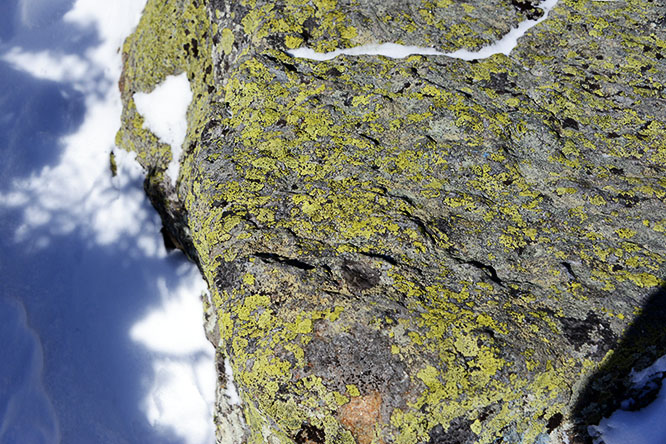 New Hampshire White Mountains Lichen