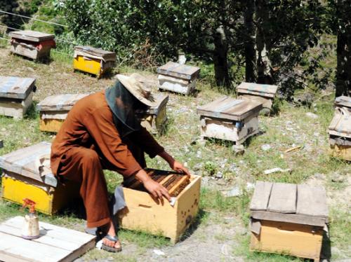 Pakistan Bee Keeper