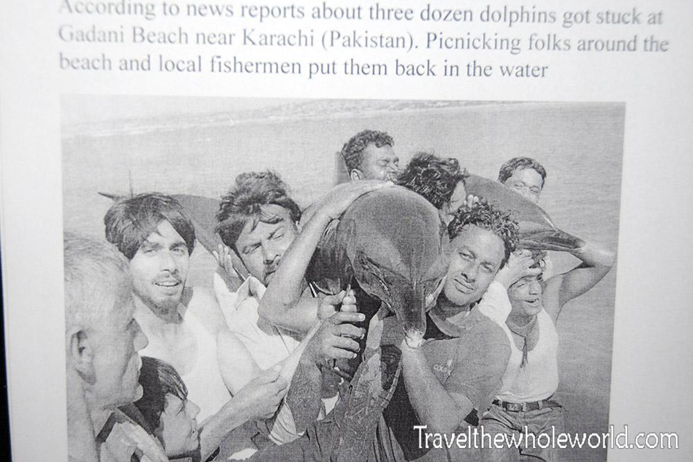 Pakistan WWF Dolphin Rescue