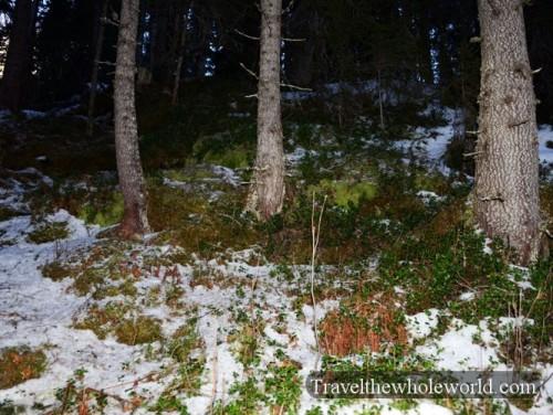 Sweden Tannforsen Forest