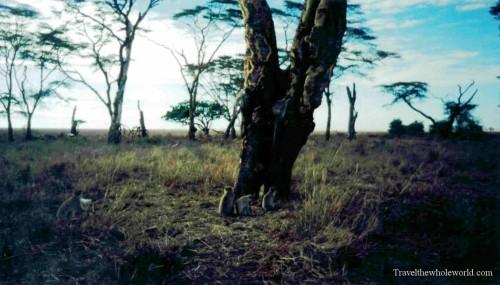Tanzania Monkeys