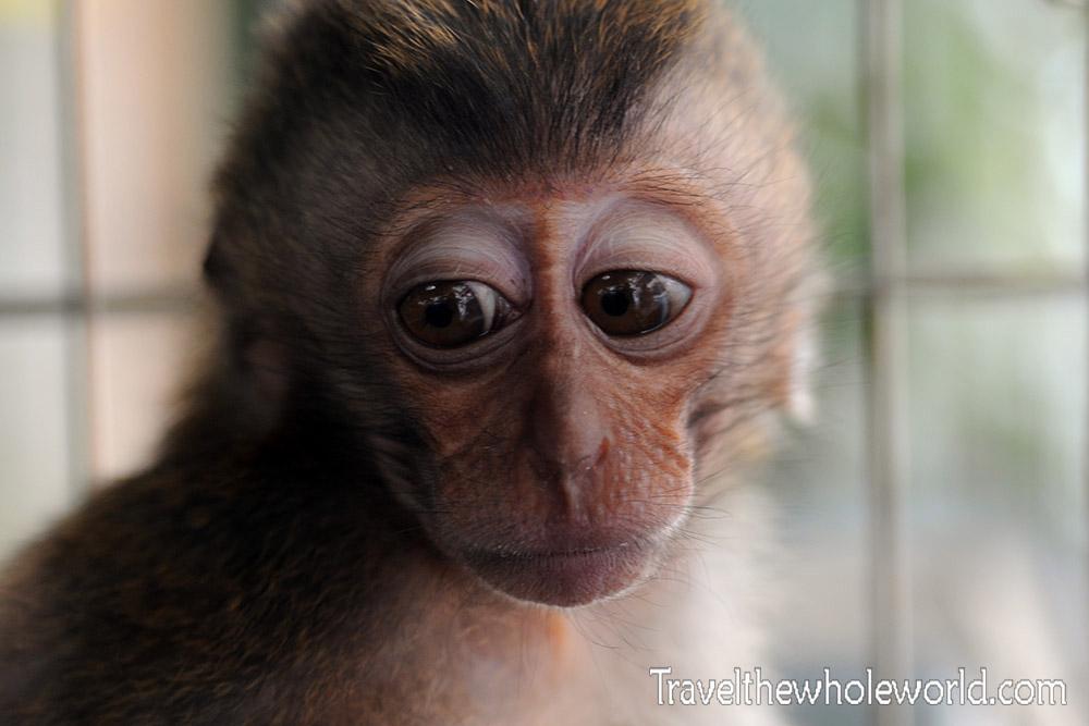 Travel Photos Jakarta Monkey Pet
