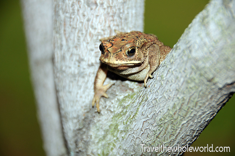 Travel Photos Jakarta Frog