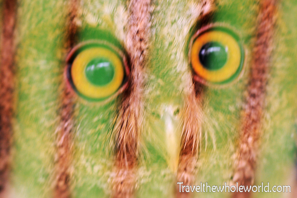 Travel Photos Jakarta Owl Pet