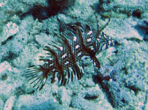 Indonesia-Lombok-Diving-Fish-Weird