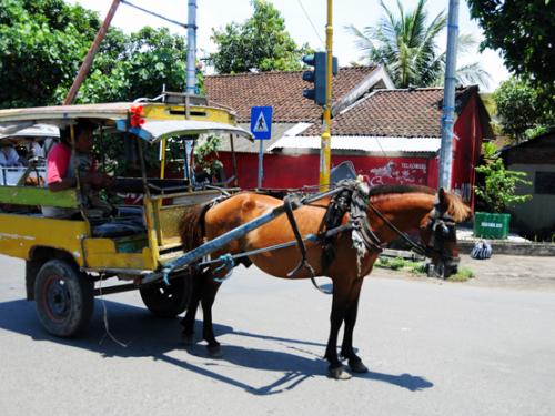 Indonesia Lombok Horse
