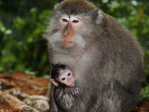 Indonesia Lombok Monkey Forest Baby