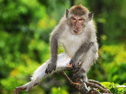 Indonesia Lombok Monkey Forest Tree
