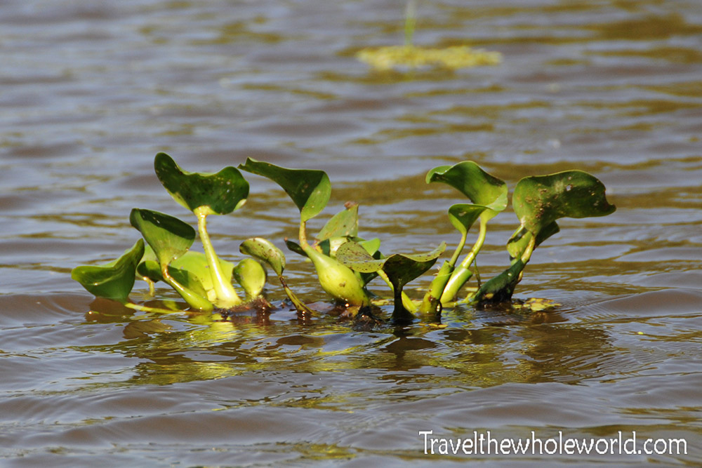 visiting the atchafalaya swamp